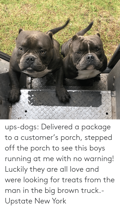 New York: ups-dogs:  Delivered a package to a customer's porch, stepped off the porch to see this boys running at me with no warning! Luckily they are all love and were looking for treats from the man in the big brown truck.- Upstate New York