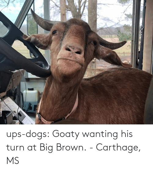 Dogs: ups-dogs:  Goaty wanting his turn at Big Brown. - Carthage, MS