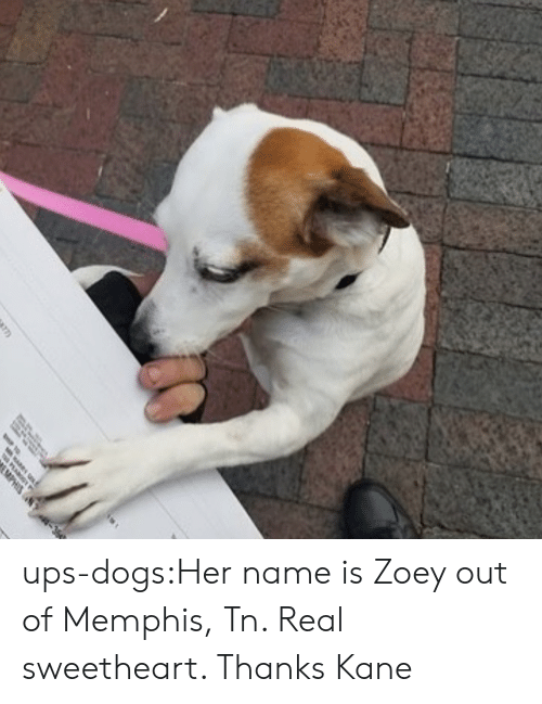 Dogs, Target, and Tumblr: ups-dogs:Her name is Zoey out of Memphis, Tn. Real sweetheart. Thanks Kane