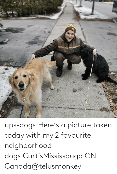 Canada: ups-dogs:Here's a picture taken today with my 2 favourite neighborhood dogs.CurtisMississauga ON Canada@telusmonkey