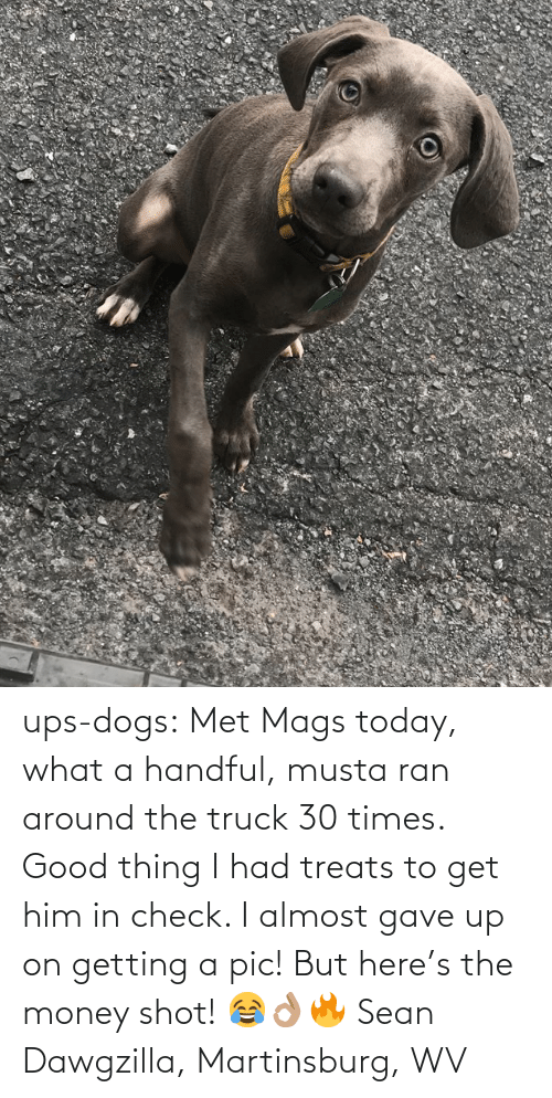 what a: ups-dogs:  Met Mags today, what a handful, musta ran around the truck 30 times. Good thing I had treats to get him in check. I almost gave up on getting a pic! But here's the money shot! 😂👌🏽🔥 Sean Dawgzilla, Martinsburg, WV