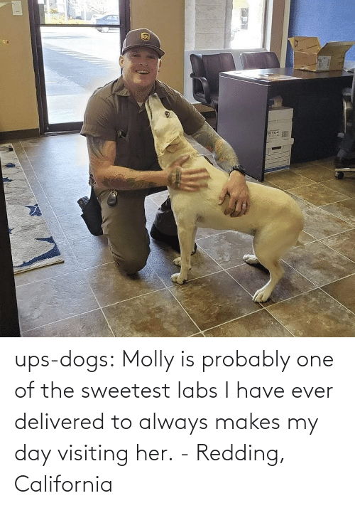 Dogs: ups-dogs:  Molly is probably one of the sweetest labs I have ever delivered to always makes my day visiting her. - Redding, California