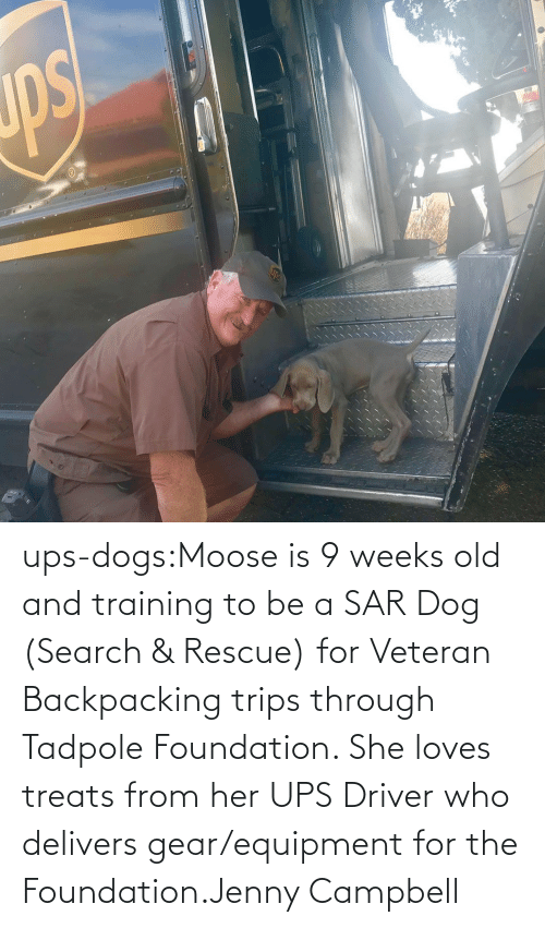 training: ups-dogs:Moose is 9 weeks old and training to be a SAR Dog (Search & Rescue) for Veteran Backpacking trips through Tadpole Foundation. She loves treats from her UPS Driver who delivers gear/equipment for the Foundation.Jenny Campbell