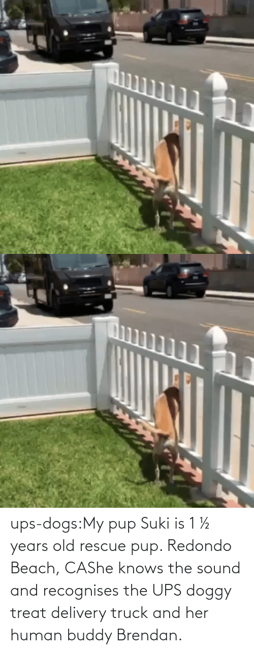 Dogs: ups-dogs:My pup Suki is 1 ½ years old rescue pup. Redondo Beach, CAShe knows the sound and recognises the UPS doggy treat delivery truck and her human buddy Brendan.