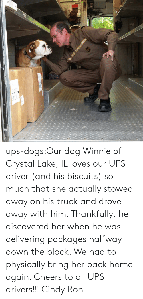 Dogs, Target, and Tumblr: ups-dogs:Our dog Winnie of Crystal Lake, IL loves our UPS driver (and his biscuits) so much that she actually stowed away on his truck and drove away with him. Thankfully, he discovered her when he was delivering packages halfway down the block. We had to physically bring her back home again. Cheers to all UPS drivers!!! Cindy  Ron