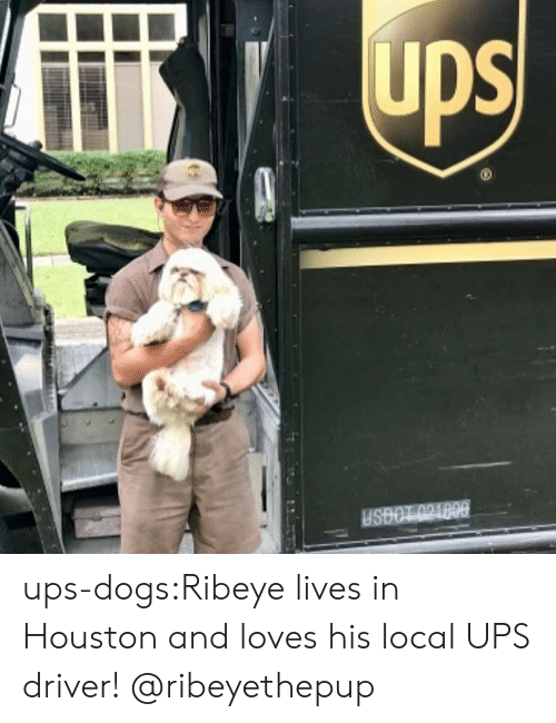 Dogs, Instagram, and Target: ups-dogs:Ribeye lives in Houston and loves his local UPS driver! @ribeyethepup