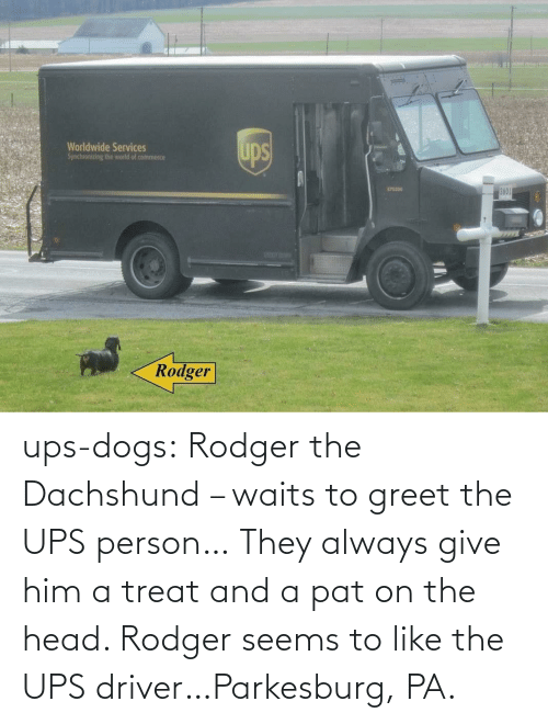 always: ups-dogs:  Rodger the Dachshund – waits to greet the UPS person… They always give him a treat and a pat on the head. Rodger seems to like the UPS driver…Parkesburg, PA.