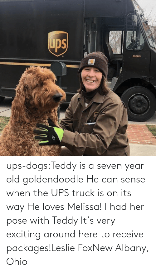 Receive: ups-dogs:Teddy is a seven year old goldendoodle He can sense when the UPS truck is on its way He loves Melissa! I had her pose with Teddy It's very exciting around here to receive packages!Leslie FoxNew Albany, Ohio