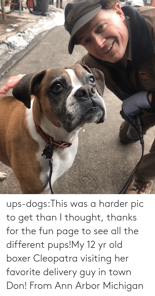 Target: ups-dogs:This was a harder pic to get than I thought, thanks for the fun page to see all the different pups!My 12 yr old boxer Cleopatra visiting her favorite delivery guy in town Don! From Ann Arbor Michigan