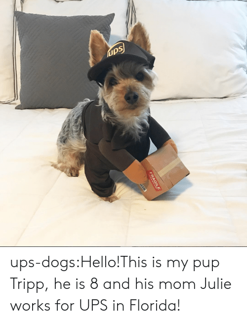 Julie: ups ups-dogs:Hello!This is my pup Tripp, he is 8 and his mom Julie works for UPS in Florida!