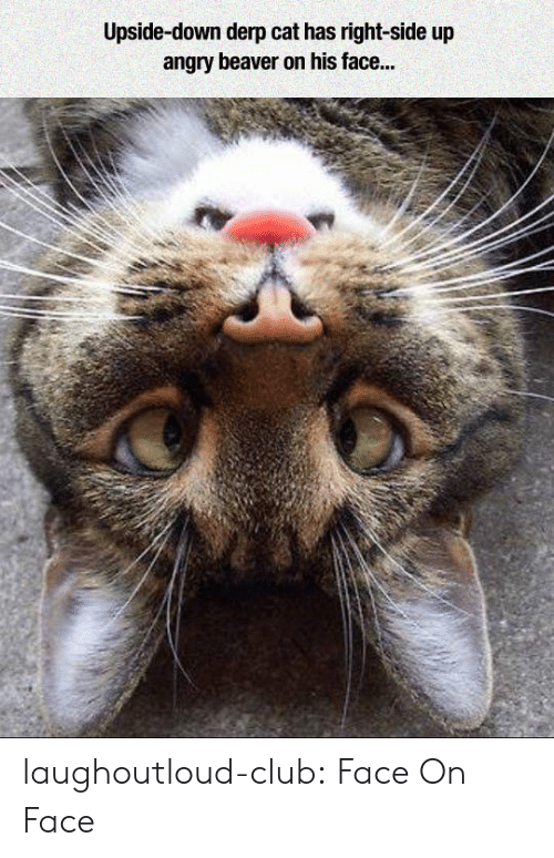 derp: Upside-down derp cat has right-side up  angry beaver on his face... laughoutloud-club:  Face On Face