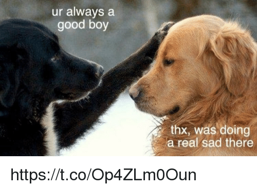 Memes, Good, and Sad: ur always a  good boy  thx, was doing  a real sad there https://t.co/Op4ZLm0Oun