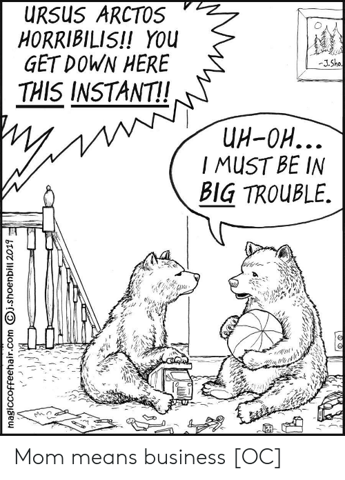 sho: URSUS ARCTOS  HORRIBILIS!! YOU  GET DOWN HERE  -J.Sho  THIS INSTANT!  UH-OH...  I MUST BE IN  BIG TROUBLE.  magiccoffeehair.com j.shoenbill 2019 Mom means business [OC]