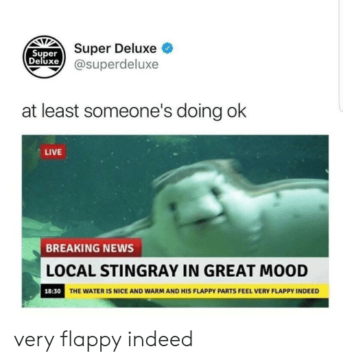Mood, News, and Breaking News: UST Super Deluxe O  xe @superdeluxe  Super  Deluxe  at least someone's doing ok  LIVE  BREAKING NEWS  LOCAL STINGRAY IN GREAT MOOD  THE WATER IS NICE AND WARM AND HIS FLAPPY PARTS FEEL VERY FLAPPY INDEED  18:30 very flappy indeed