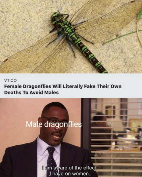 male: Vт.cO  Female Dragonflies Will Literally Fake Their Own  Deaths To Avoid Males  Male dragonflies  I am aware of the effect  I have on women.