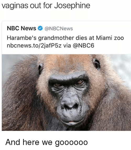 Dank, Nbc News, and Nbcnews: vaginas out for Josephine  NBC News ONBCNews  Harambe's grandmother dies at Miami zoo  nbcnews.to/2jafP5z via @NBC6 And here we goooooo