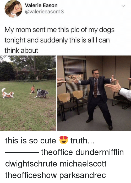 Cute, Dogs, and Memes: Valerie Eason  @valerieeason13  My mom sent me this pic of my dogs  tonight and suddenly this is all I can  think about this is so cute 😍 truth... ———— theoffice dundermifflin dwightschrute michaelscott theofficeshow parksandrec