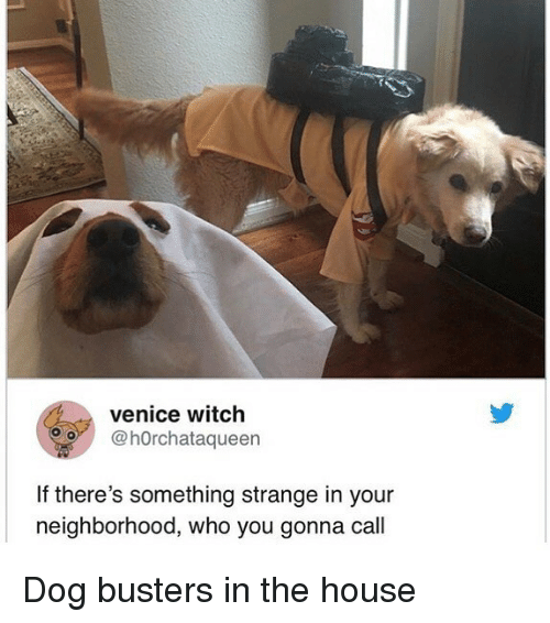 venice: venice witch  O@hOrchataqueen  If there's something strange in your  neighborhood, who you gonna call Dog busters in the house