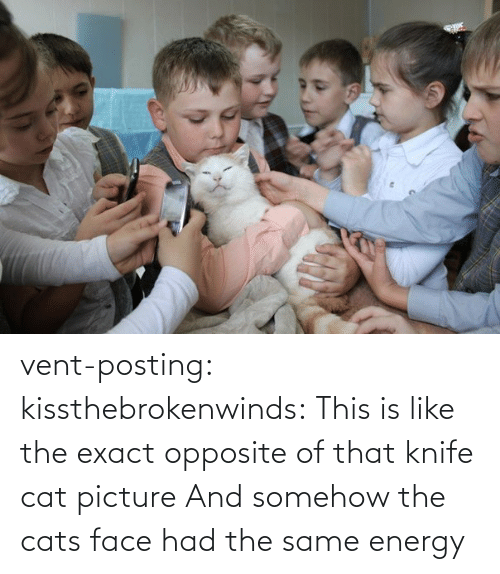Energy: vent-posting:  kissthebrokenwinds: This is like the exact opposite of that knife cat picture  And somehow the cats face had the same energy