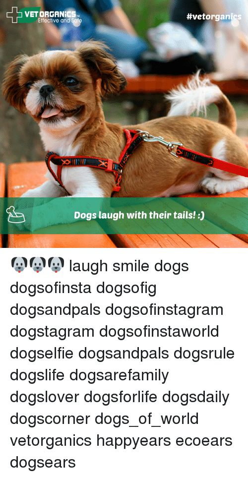 Dog Laughing: VET ORGANICS TM  #vet organics  Effective and Safe  Dogs laugh with their tails! 🐶🐶🐶 laugh smile dogs dogsofinsta dogsofig dogsandpals dogsofinstagram dogstagram dogsofinstaworld dogselfie dogsandpals dogsrule dogslife dogsarefamily dogslover dogsforlife dogsdaily dogscorner dogs_of_world vetorganics happyears ecoears dogsears