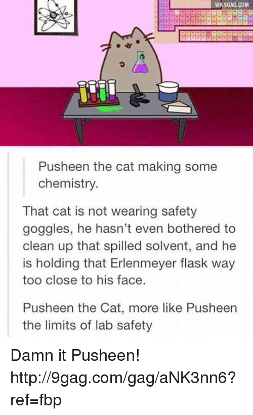 Dank, 🤖, and Pusheen: VIA9GAG.COM  Push een the cat making some  chemistry.  That cat is not wearing safety  goggles, he hasn't even bothered to  clean up that spilled solvent, and he  is holding that Erlenmeyer flask way  too close to his face  Pusheen the Cat, more like Pusheen  the limits of lab safety Damn it Pusheen! http://9gag.com/gag/aNK3nn6?ref=fbp