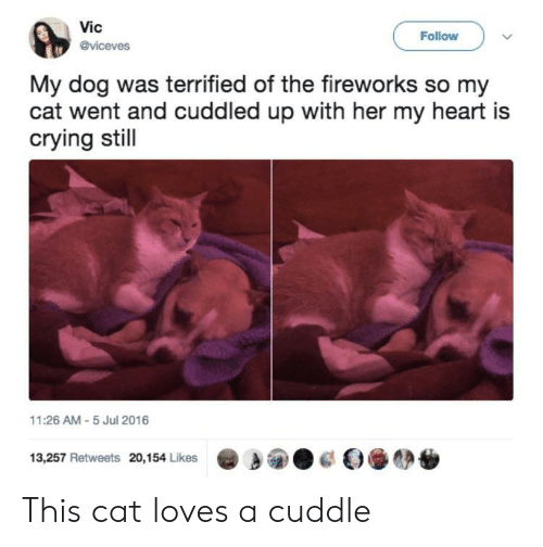 Crying, Fireworks, and Heart: Vic  @viceves  Follow  My dog was terrified of the fireworks so my  cat went and cuddled up with her my heart is  crying stil  11:26 AM-5 Jul 2016  13,257 Retweets 20,154 Likes This cat loves a cuddle