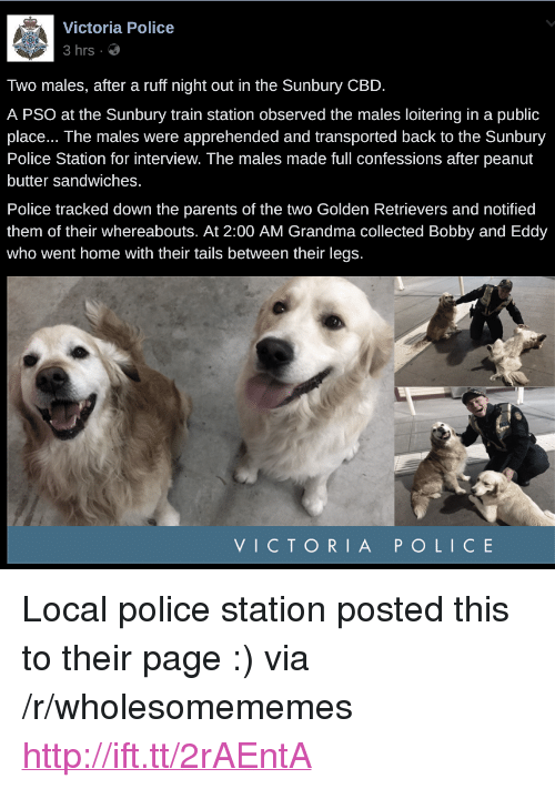 "Grandma, Parents, and Police: Victoria Police  3hrs .  Two males, after a ruff night out in the Sunbury CBD  A PSO at the Sunbury train station observed the males loitering in a public  place... The males were apprehended and transported back to the Sunbury  Police Station for interview. The males made full confessions after peanut  butter sandwiches.  Police tracked down the parents of the two Golden Retrievers and notified  them of their whereabouts. At 2:00 AM Grandma collected Bobby and Eddy  who went home with their tails between their legs.  VICTORIA POLICE <p>Local police station posted this to their page :) via /r/wholesomememes <a href=""http://ift.tt/2rAEntA"">http://ift.tt/2rAEntA</a></p>"
