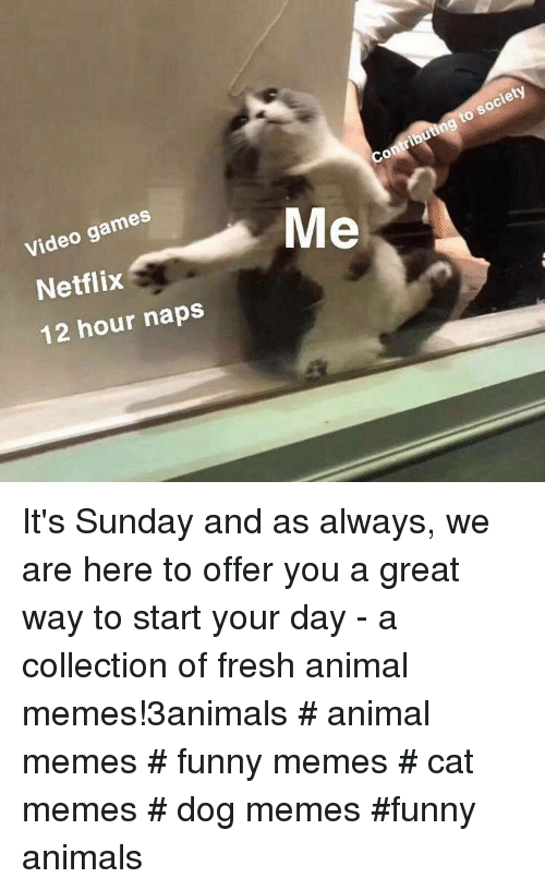 Animals, Fresh, and Funny: Video games  Netflix  12 hour naps  Contributing to society It's Sunday and as always, we are here to offer you a great way to start your day - a collection of fresh animal memes!3animals # animal memes # funny memes # cat memes # dog memes #funny animals