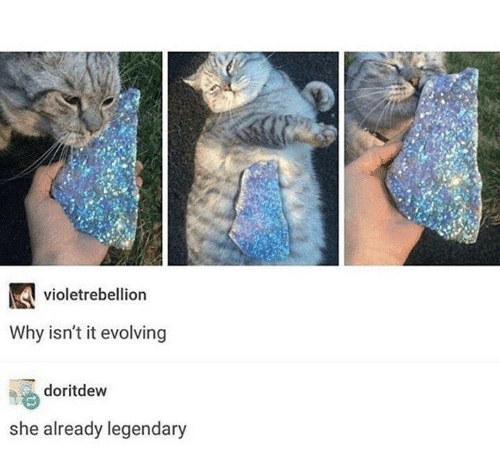 Memes, 🤖, and Why: violetrebellion  Why isn't it evolving  doritdew  she already legendary