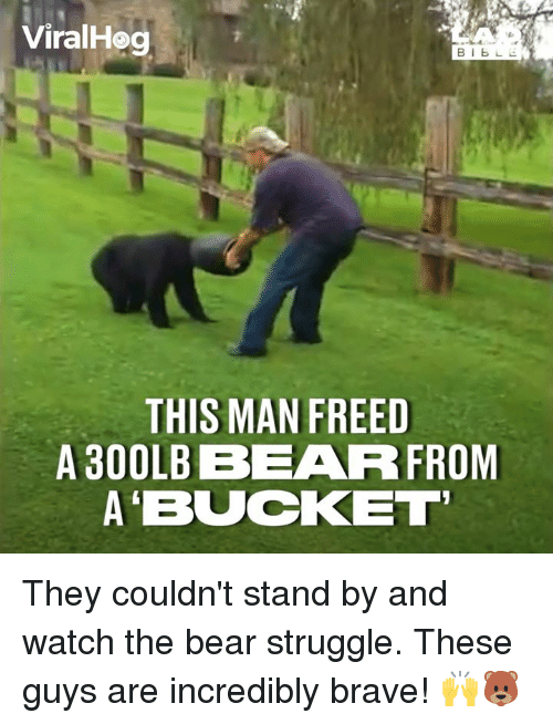 Dank, Struggle, and Bear: ViralHeg  THIS MAN FREED  A 300LB BEARR FROM  A'BUCKET They couldn't stand by and watch the bear struggle. These guys are incredibly brave! 🙌🐻