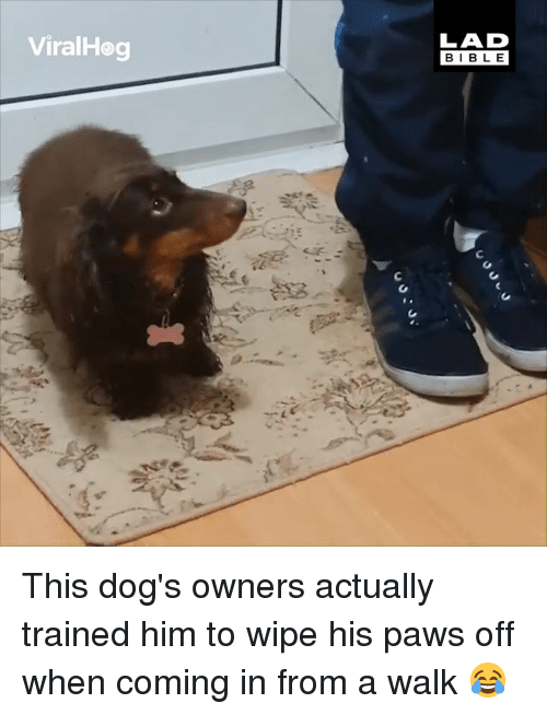 Dank, Dogs, and 🤖: ViralHog  LAD  BIBL E This dog's owners actually trained him to wipe his paws off when coming in from a walk 😂