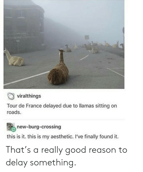 Finally Found: viralthings  Tour de France delayed due to llamas sitting on  roads.  new-burg-crossing  this is it. this is my aesthetic. I've finally found it. That's a really good reason to delay something.