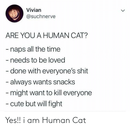 Will Fight: Vivian  @suchnerve  ARE YOU A HUMAN CAT?  - naps all the time  - needs to be loved  - done with everyone's shit  - always wants snacks  - might want to kill everyone  - cute but will fight Yes!! i am Human Cat