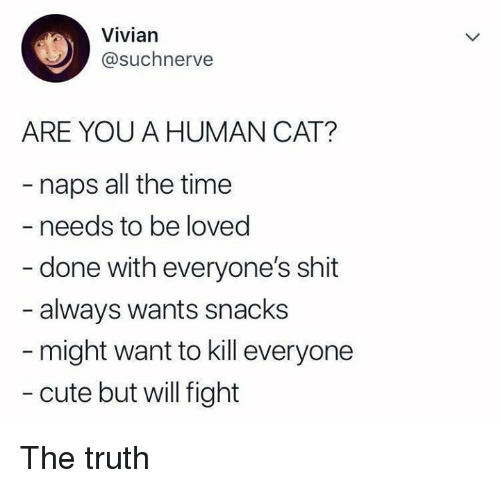 Cute, Memes, and Shit: Vivian  @suchnerve  ARE YOU A HUMAN CAT?  naps all the time  - needs to be loved  - done with everyone's shit  always wants snacks  might want to kill everyone  - cute but will fight The truth