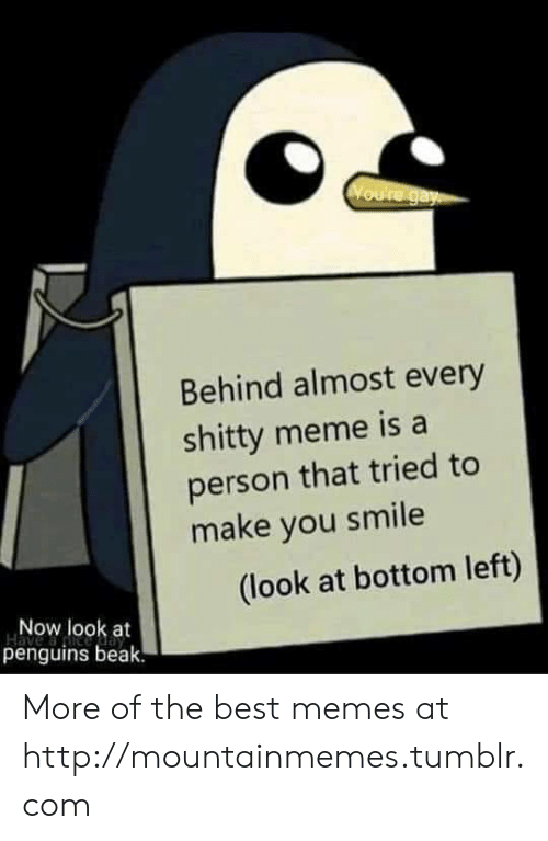 Penguins: Voure gay  Behind almost every  shitty meme is a  person that tried to  make you smile  (look at bottom left)  Now look at  penguins beak. More of the best memes at http://mountainmemes.tumblr.com