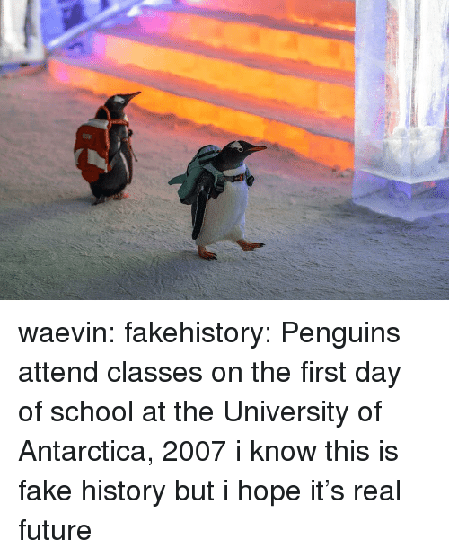 Antarctica: waevin: fakehistory: Penguins attend classes on the first day of school at the University of Antarctica, 2007 i know this is fake history but i hope it's real future