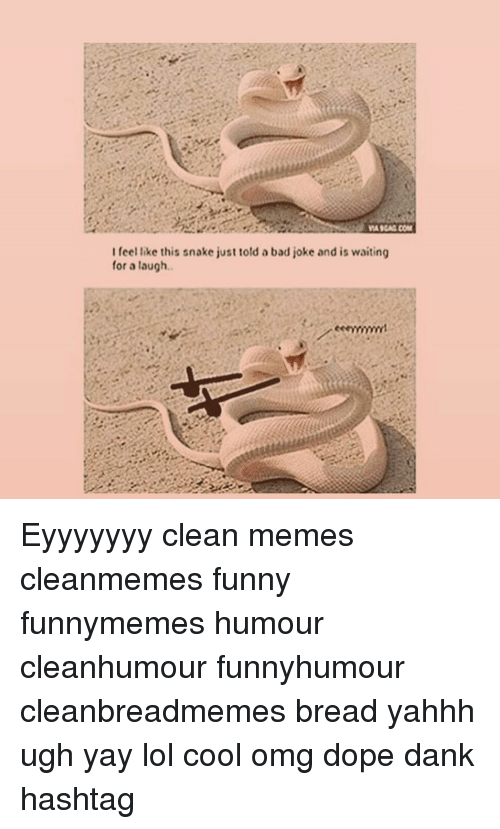 A Bad Joke: WAIGAG COM  I feel like this snake just told a bad joke and is waiting  for a laugh. Eyyyyyyy clean memes cleanmemes funny funnymemes humour cleanhumour funnyhumour cleanbreadmemes bread yahhh ugh yay lol cool omg dope dank hashtag