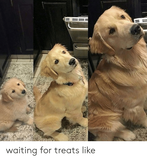Waiting..., For, and Like: waiting for treats like