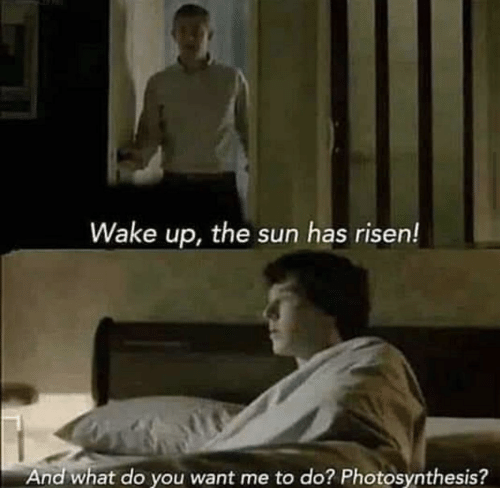 You Want Me: Wake up, the sun has risen!  And what do you want me to do? Photosynthesis?