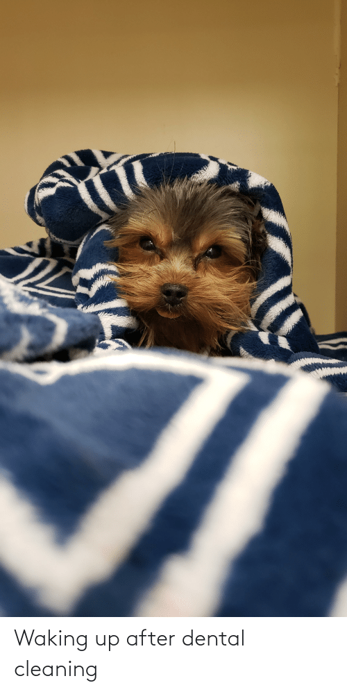 waking up: Waking up after dental cleaning