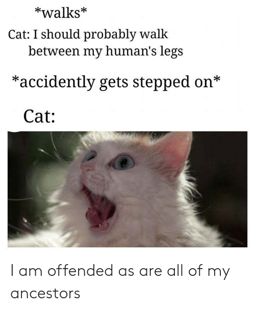 accidently: *walks*  Cat: I should probably walk  between my human's legs  *accidently gets stepped on*  Cat: I am offended as are all of my ancestors