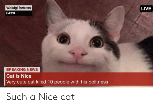 waluigi: Waluigi fortress  LIVE  04:20  BREAKING NEWS  Cat is Nice  Very cute cat kiled 10 people with his politness Such a Nice cat