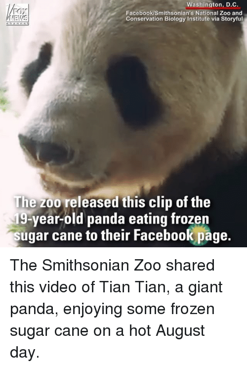 Smithsonian: Washington, D.C.  Facebook/Smithsonian's National Zoo and  Conservation Biology Institute via Storyful  The zoo released this clip of the  19-year-old panda eating frozen  sugar cane to their Facebook page.  their Facebook page The Smithsonian Zoo shared this video of Tian Tian, a giant panda, enjoying some frozen sugar cane on a hot August day.