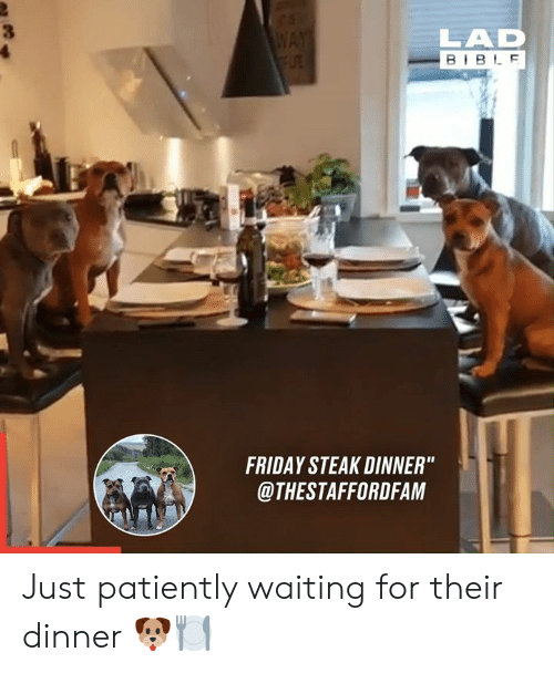"Patiently Waiting: WAY  FLRE  LAD  BIBLE  FRIDAY STEAK DINNER""  @THESTAFFORDFAM Just patiently waiting for their dinner 🐶🍽"