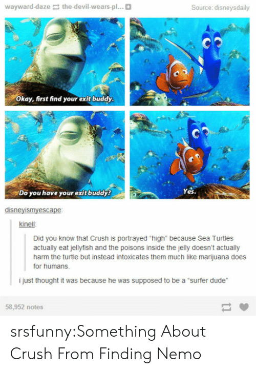 "Finding Nemo: wayward-daze the-devil-wears-pl...  Source: disneysdaily  Okay, first find your exit buddy  Do you have your exit buddy?  Yes.  disneyismyescape  kinell  Did you know that Crush is portrayed ""high"" because Sea Turtles  actually eat jellyfish and the poisons inside the jelly doesn't actually  harm the turtle but instead intoxicates them much like marijuana does  for humans.  i just thought it was because he was supposed to be a ""surfer dude""  58,952 notes srsfunny:Something About Crush From Finding Nemo"