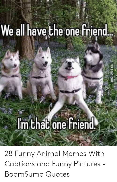 Funny, Memes, and Animal: We all have the one friend  m chat one Friend. 28 Funny Animal Memes With Captions and Funny Pictures - BoomSumo Quotes