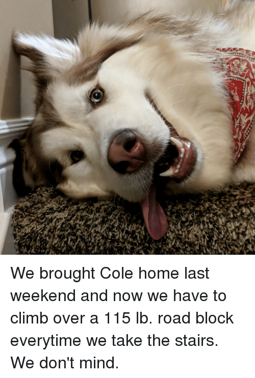Home, Mind, and Weekend: We brought Cole home last weekend and now we have to climb over a 115 lb. road block everytime we take the stairs. We don't mind.