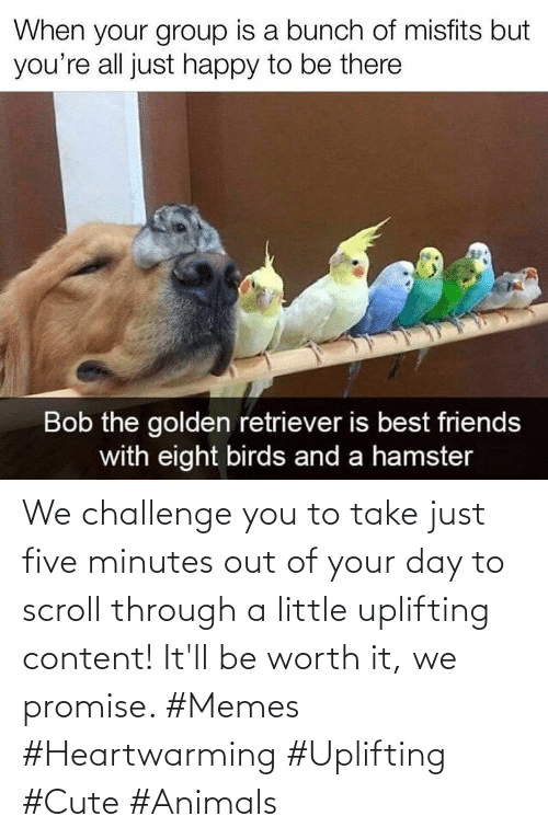 Scroll: We challenge you to take just five minutes out of your day to scroll through a little uplifting content! It'll be worth it, we promise. #Memes #Heartwarming #Uplifting #Cute #Animals