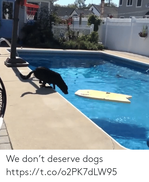 Dogs, Funny, and Don: We don't deserve dogs https://t.co/o2PK7dLW95