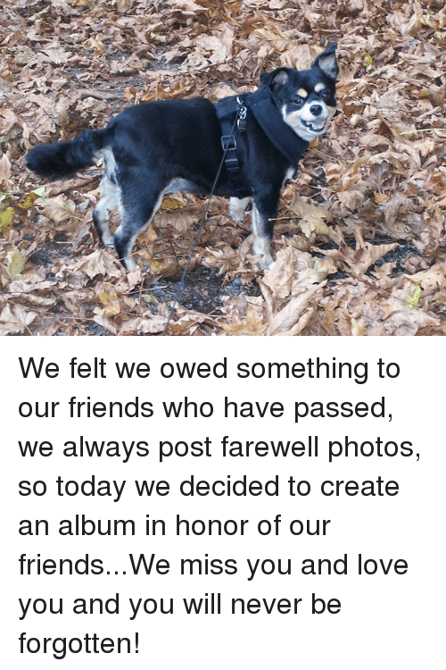 Friends, Love, and Memes: We felt we owed something to our friends who have passed, we always post farewell photos, so today we decided to create an album in honor of our friends...We miss you and love you and you will never be forgotten!